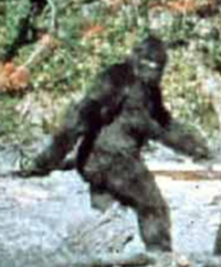 Bigfoot photo