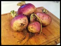 Raw turnips