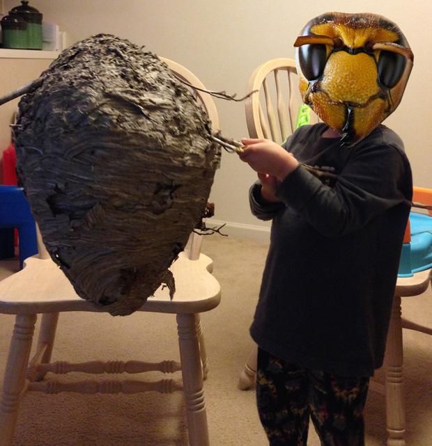 hornet (paper wasp) nest