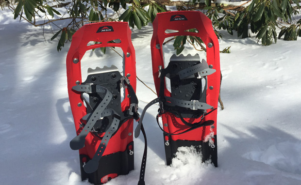 Two angry snowshoes