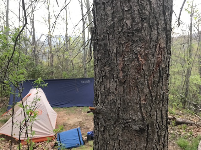 Tent, hammock, and a tree with claw marks.