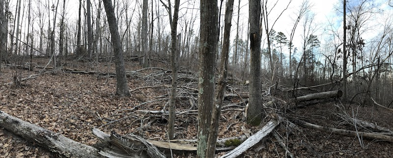 downed trees in the uwharrie forest