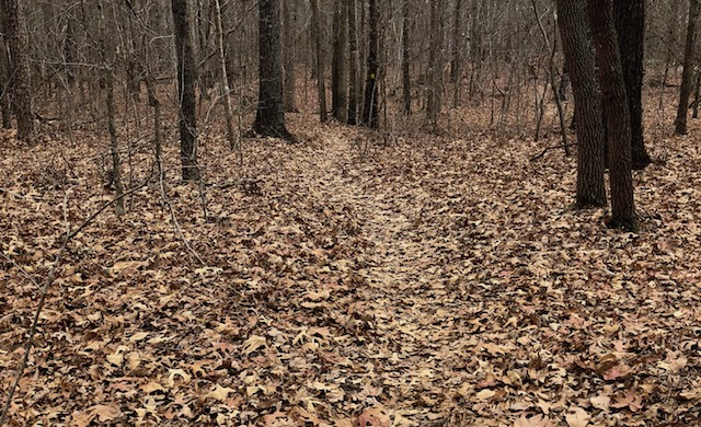 trail in uwharrie forest