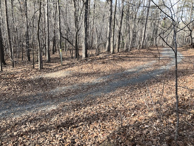 gravel road in uwharrie forest